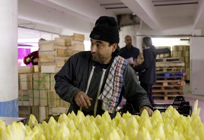 Agriculture urbaine. Il y a de la vie dans les entrailles de nos villes.Coup de projecteur sur la start-up française Cycloponics qui transforme des souterrains abandonnés à Paris et Strasbourg en fermes urbaines.