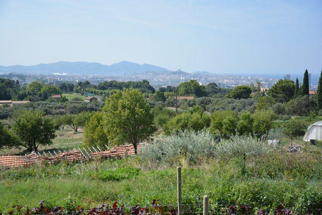 Intensivement bio ! L'agriculture urbaine 1