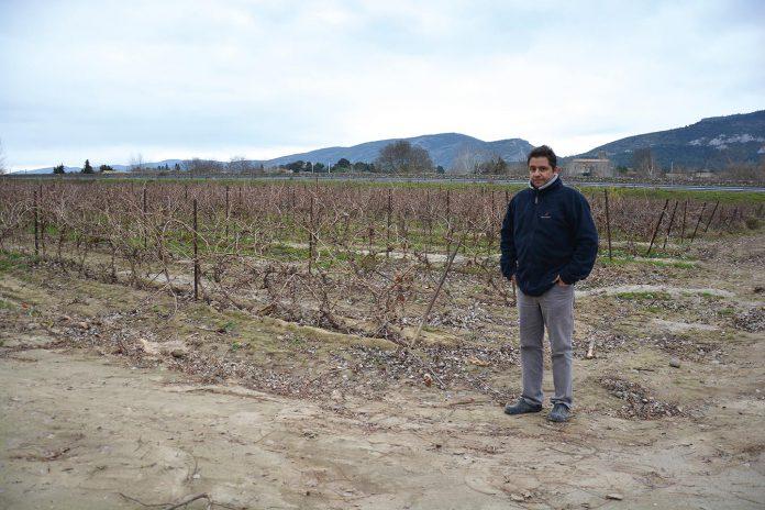 Installé en Gaec depuis 2000, le couple a perdu 2,5 hectares de vignes (sur leurs 30 hectares) situés tous près du fleuve. Seules quelques rangées ont pu être relevées.