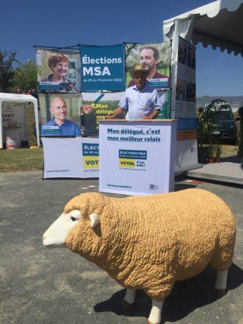 Du muscle, de la sueur et des bouclettes. Le Dorat, petite commune de Haute-Vienne, est devenue pendant 4 jours la capitale mondiale du mouton en accueillant pour la première fois en France le championnat mondial de la tonte. World sheep shearing and woolhandling championship.