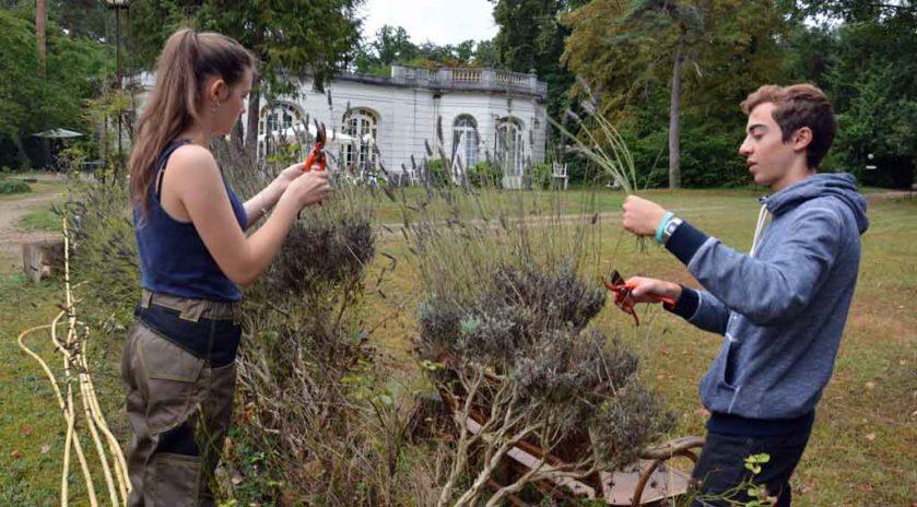 Solenn et Clément, 18 et 17 ans, s'attaquent à la lavande. ©Alexandre Roger/Le Bimsa