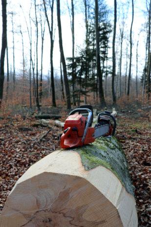 Tempête silencieuse dans les forêts du Grand Est | le bimsa https://lebimsa.msa.fr/?p=18975 Les forêts du Grand Est ont connu une fin d'année 2019 noire avec un nombre d'accidents mortels en forte hausse. En cause, des arbres fragilisés par le réchauffement climatique et des chutes de branches à répétition. Patrick Bangert, bûcheron à la retraite et élu de la MSA Alsace, tire la sonnette d'alarme