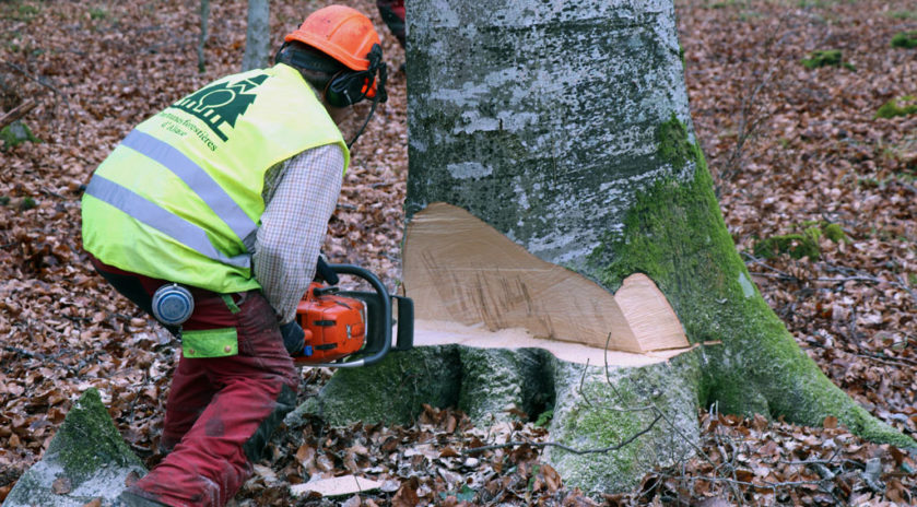 Forêts du Grand Est La tempête silencieuse Les forêts du Grand Est ont connu une fin d'année 2019 noire avec un nombre d'accidents mortels en forte hausse. En cause, des arbres fragilisés par le réchauffement climatique et des chutes de branches à répétition. Patrick Bangert, bûcheron à la retraite et élu de la MSA Alsace, tire la sonnette d'alarme.