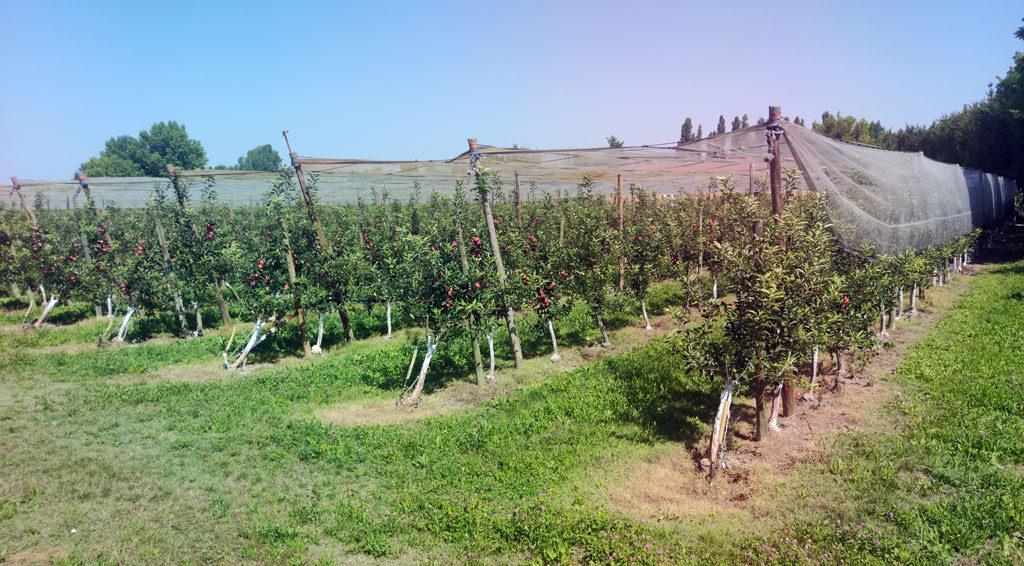 Covid-19. Bouches-du-Rhône La MSA au cœur du cluster Près de 300 saisonniers agricoles ont été testés positifs au Covid-19 au mois de juin dans les Bouches-du-Rhône. La plupart ont été recrutés par une société d'intérim espagnole spécialisée dans le travail détaché en agriculture. Dans cette course contre la montre contre le virus, la souplesse de l'organisation et la précieuse connaissance du terrain ont permis aux équipes de la MSA Provence Azur de faire la différence.  #Accompagnement #Coronavirus #Saisonniers