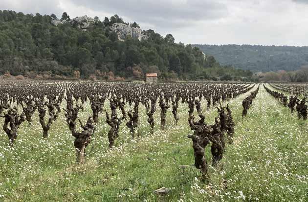 Paysage viticole autour de Saint-Jean-de-Minervois (Hérault)